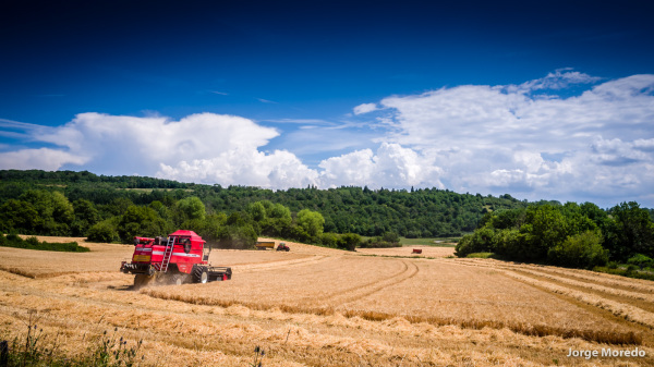 Harvest time in the Jura