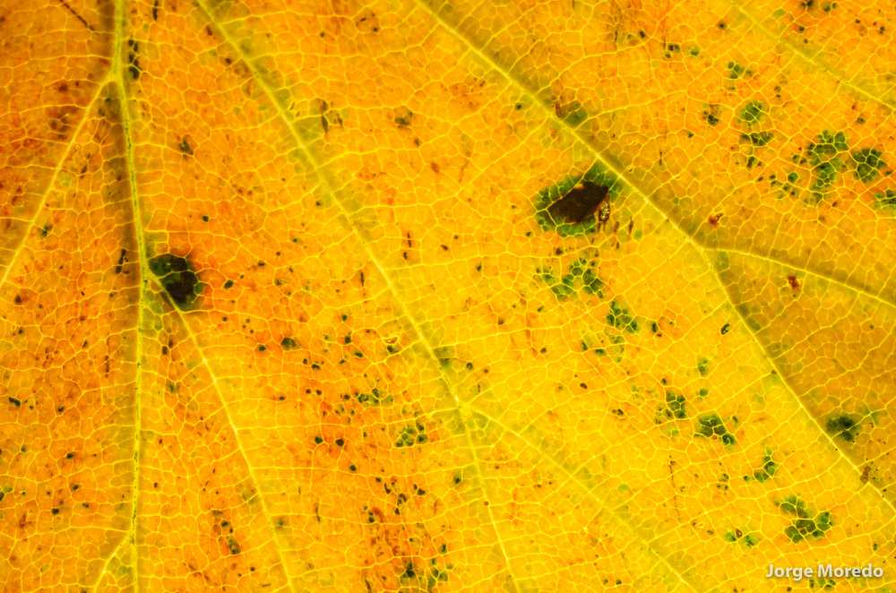 close-up of a yellow leaf