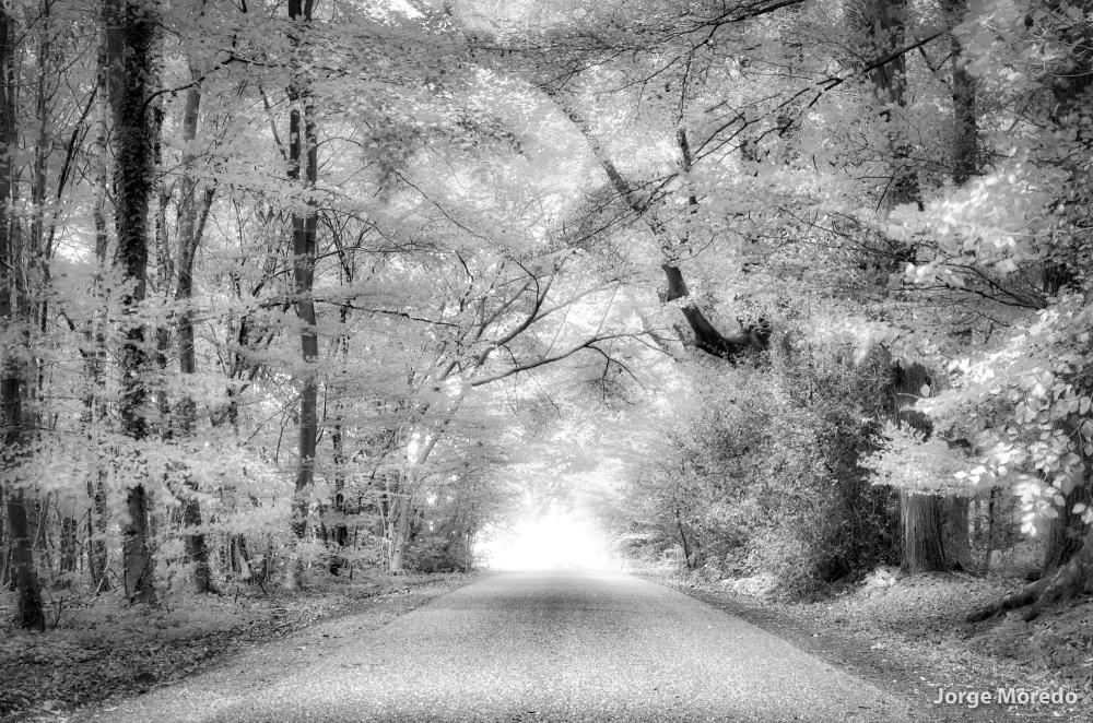 White forest in Tankenberg