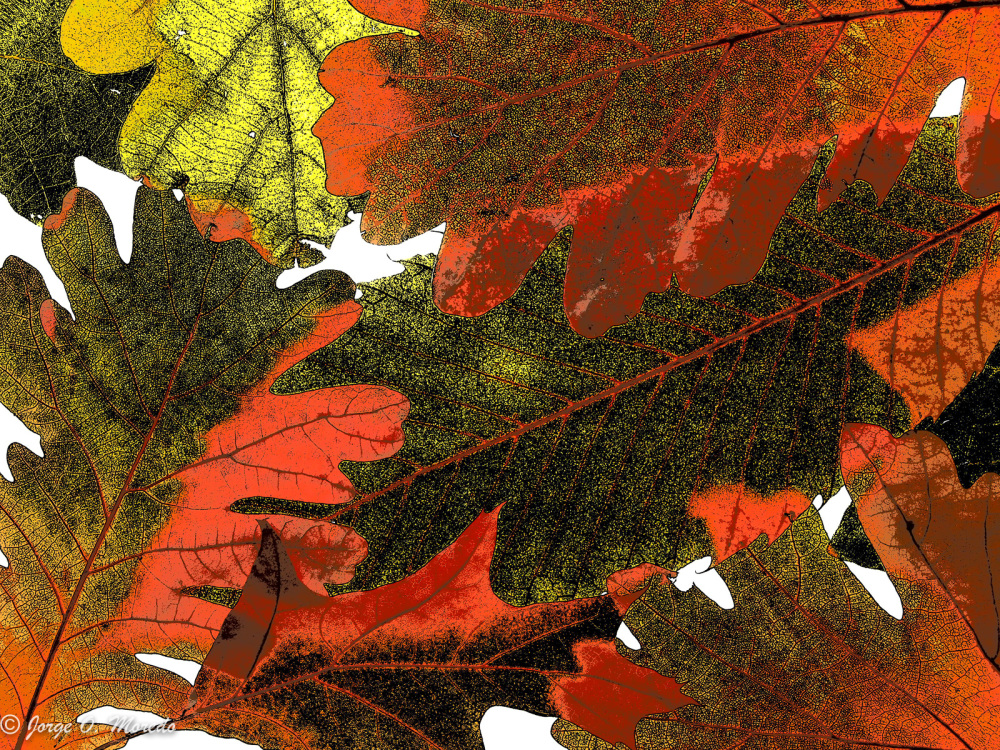 Abstract closeup of autumn leaves
