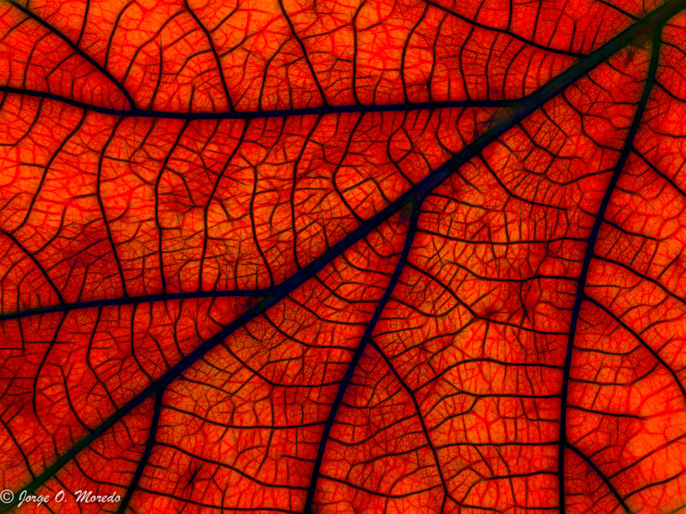 Red leaf processed in Topaz Studio