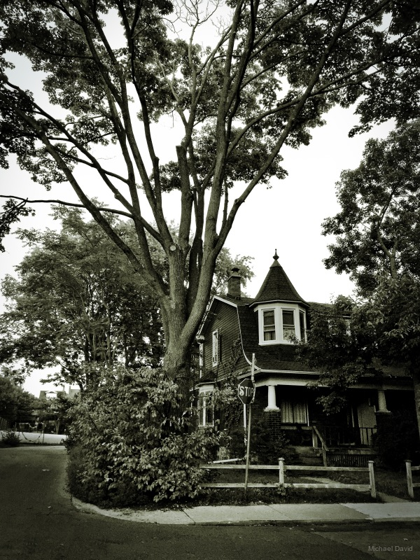 Palmerston Avenue