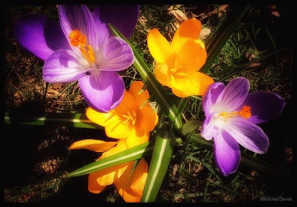 Spring as rebirth