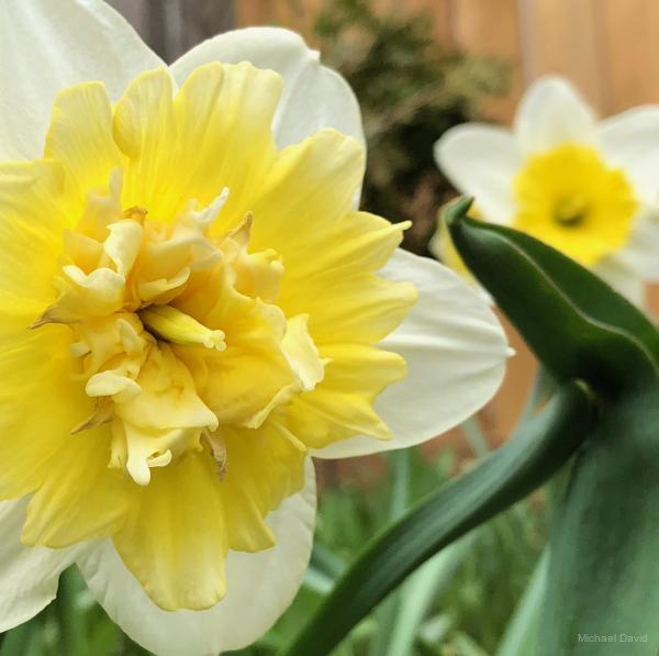Spring Bursting