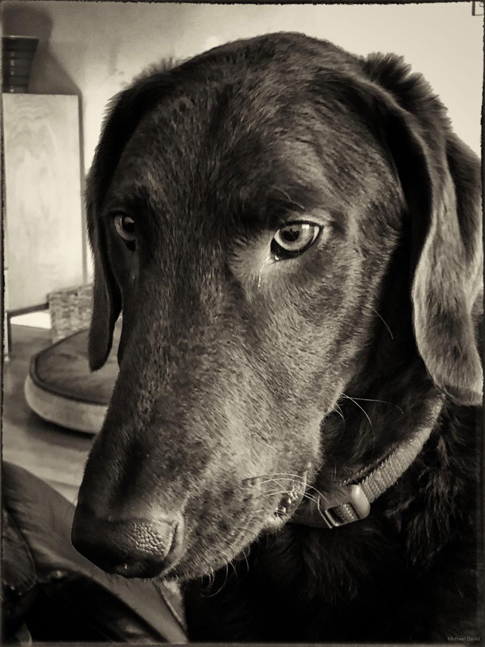 Pensive closeup
