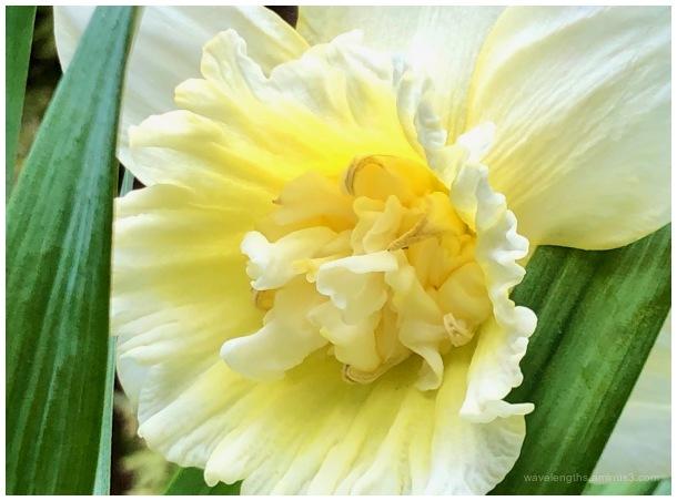 Spring rites