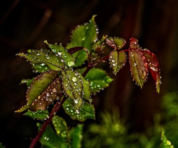 Raindrop's