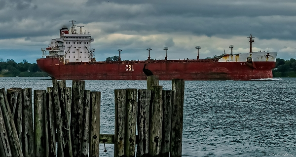 OAKGLEN. ( Bulk Carrier ) Canada.