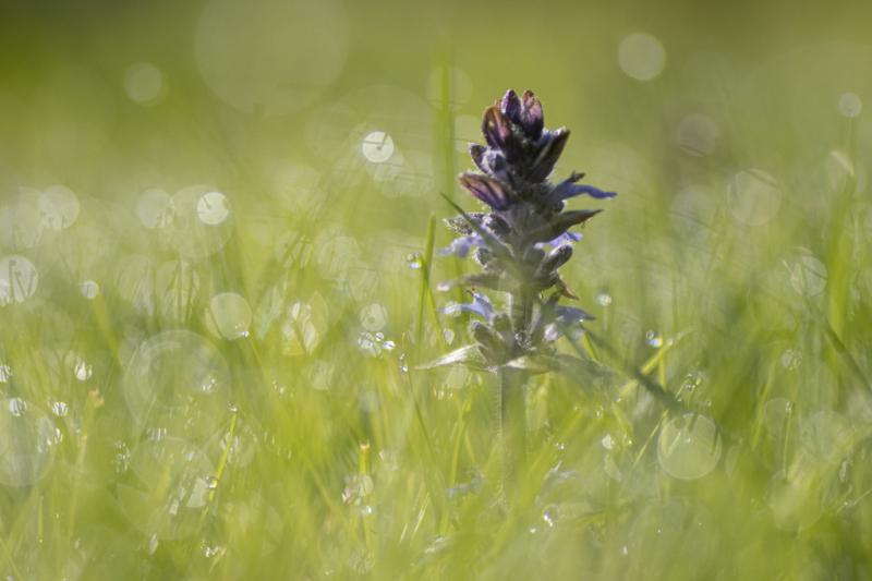 une fleur dans le vert de l'herbe