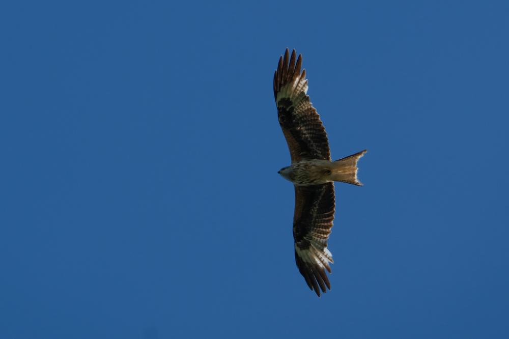 oiseau en plein vol