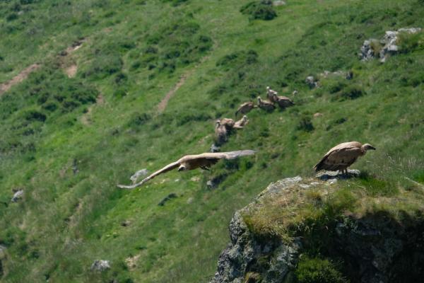 groupe de vautours