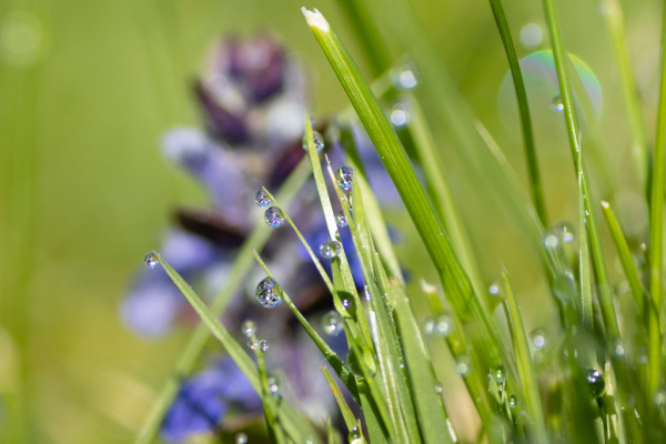 une fleur se reflète dans plusieurs gouttes