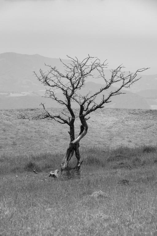 un arbre mort en montagne