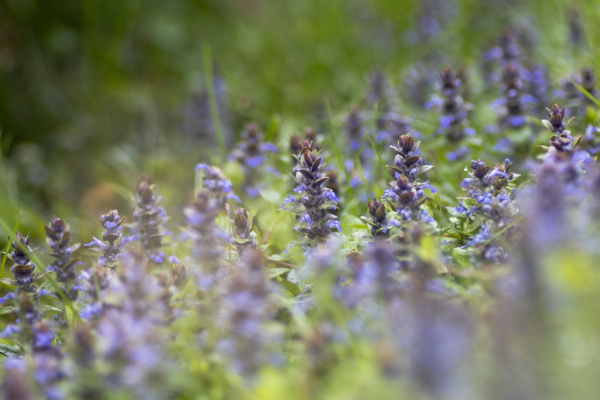 un champ de fleurs