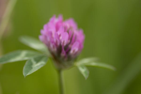 macro d'une fleur avec flou de bougé