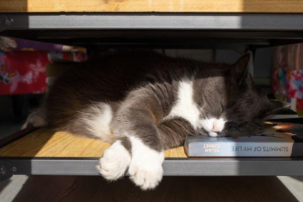 gros plan d'un chat qui dort