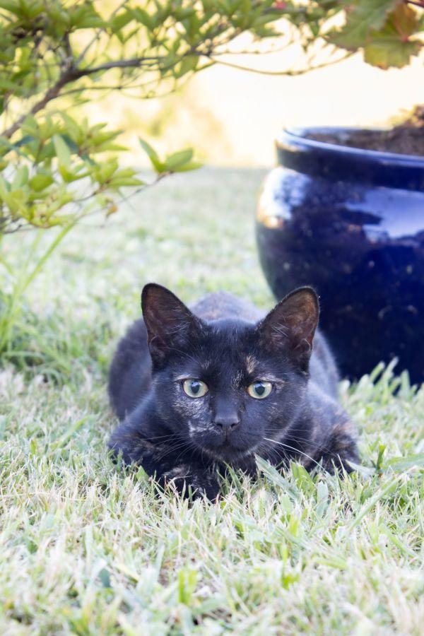 un chat prêt à bondir
