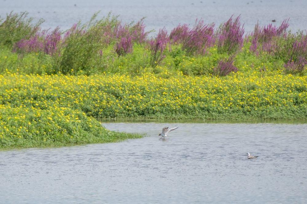 oiseaux dans les marais d'orx (france)
