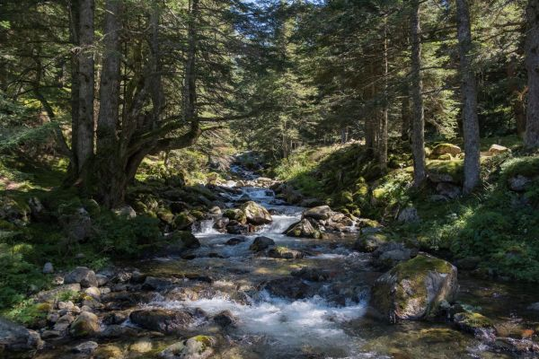 paysage, vue d'une forêt
