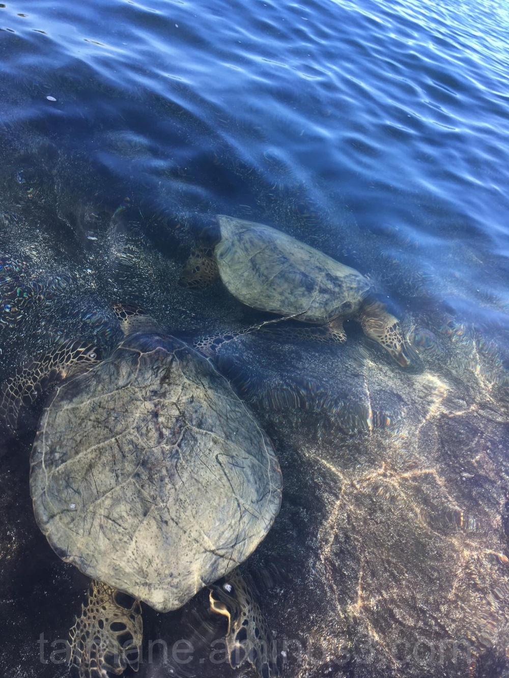 Turtles by bay