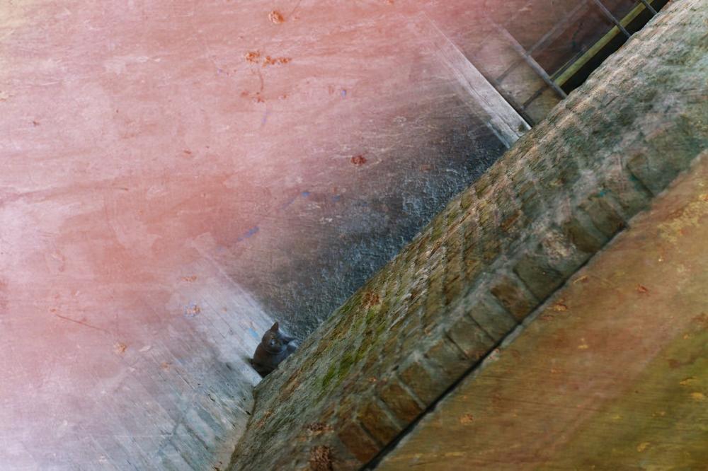 Un regard entre deux murs...