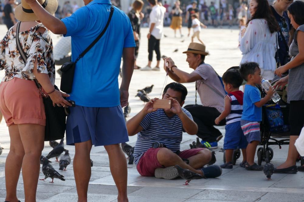 Le pigeon apprécie la présence de l'homme...