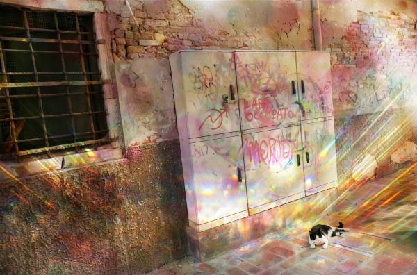 Les yeux de chat réactives à la lumière...