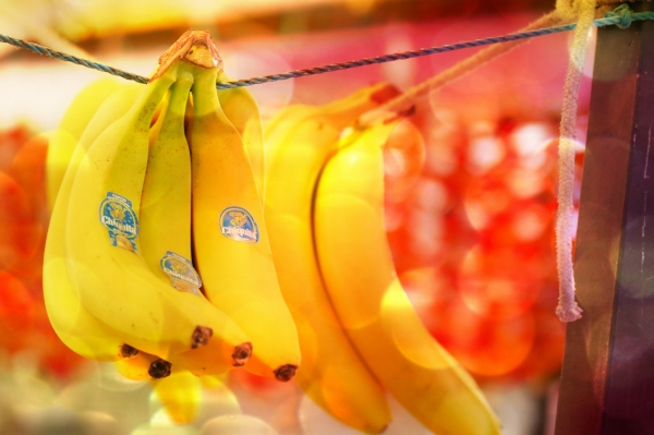 Les bananes mûrissent en s'accrochant à la lumière