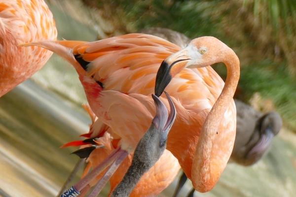 Perdre des plumes à force de se prendre le bec...