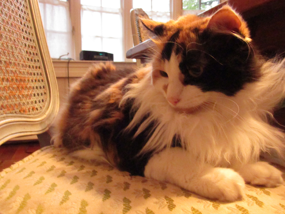 My beautiful cat part.1