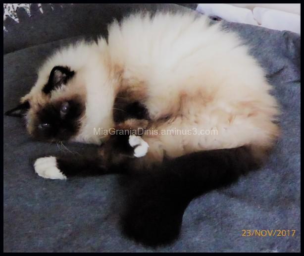 My Cat Liza
