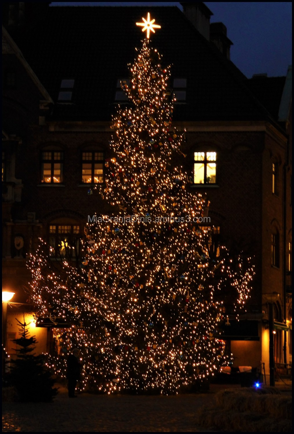 Christmas Tree in Lund City