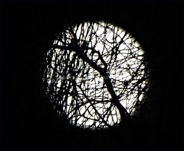 A Different Full Moon