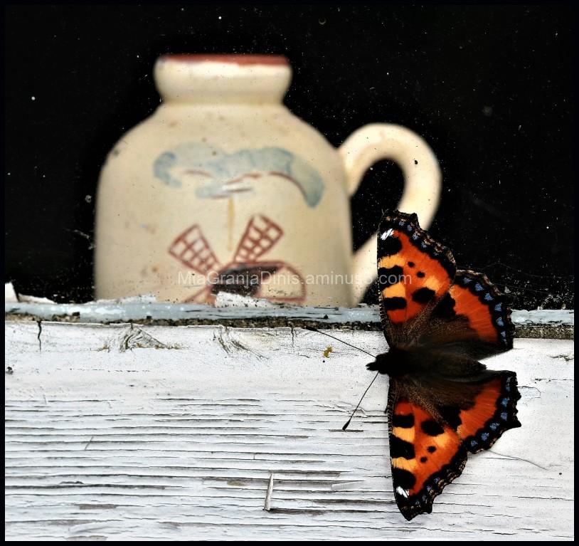 Butterfly in an Old Window