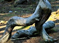 Troll Forest on Öland
