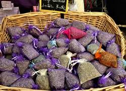 A Lovely Smell of Lavender