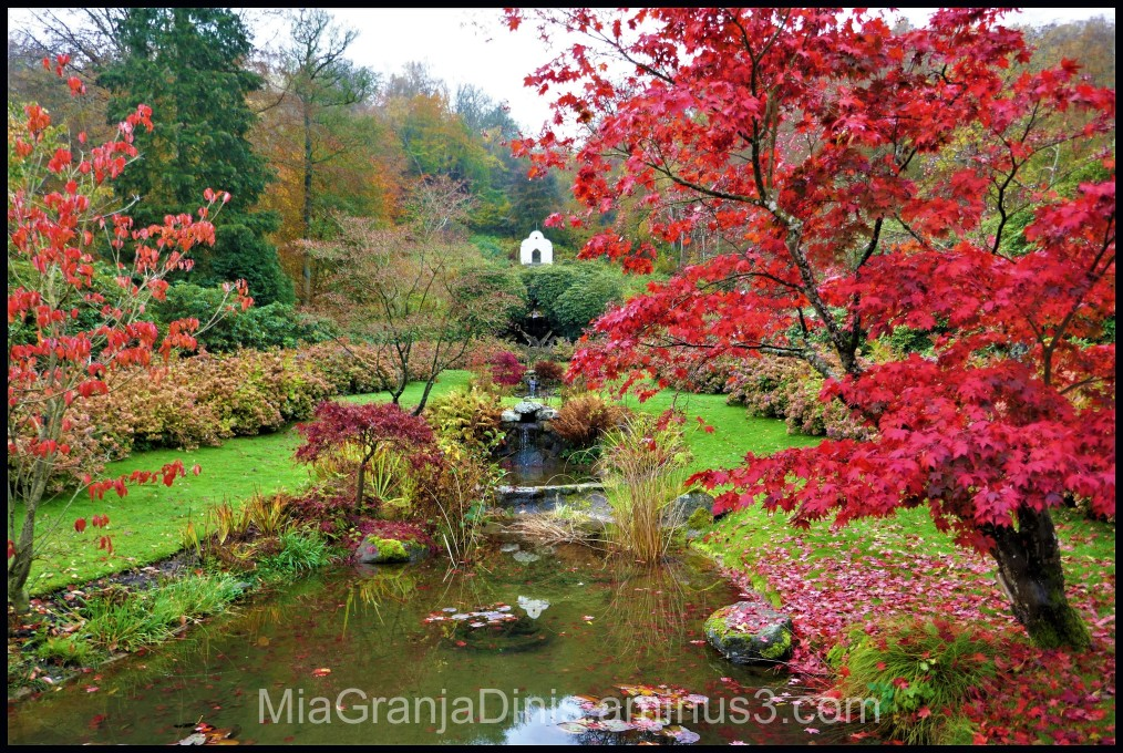 trees garden water house nature peace