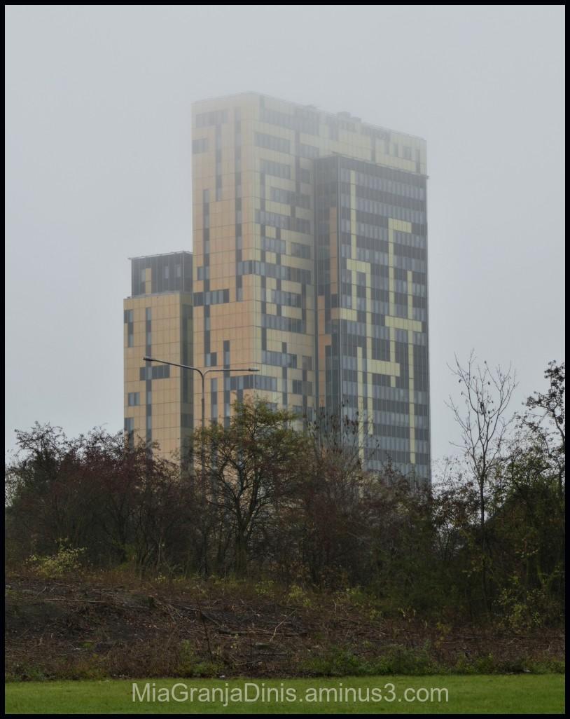 Fog In my Neighborhood
