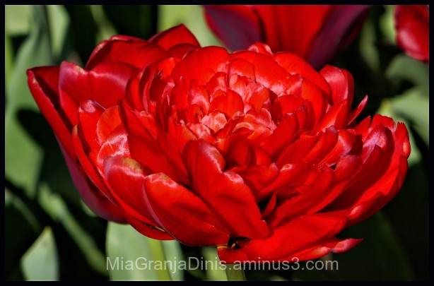 Beautifil Red