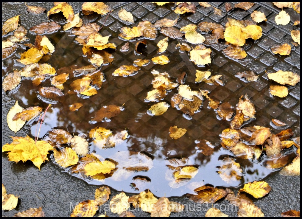 Autumn And Rain