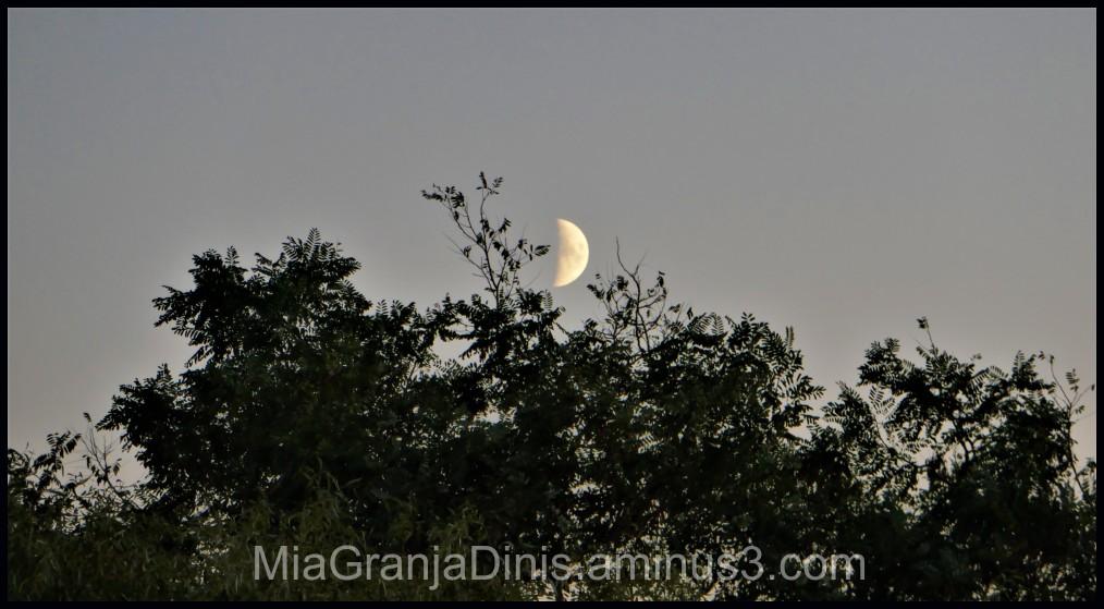 I  See The Moon Tonight