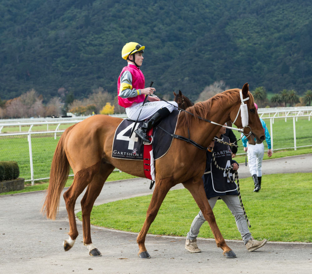 Raceday at Te Aroha