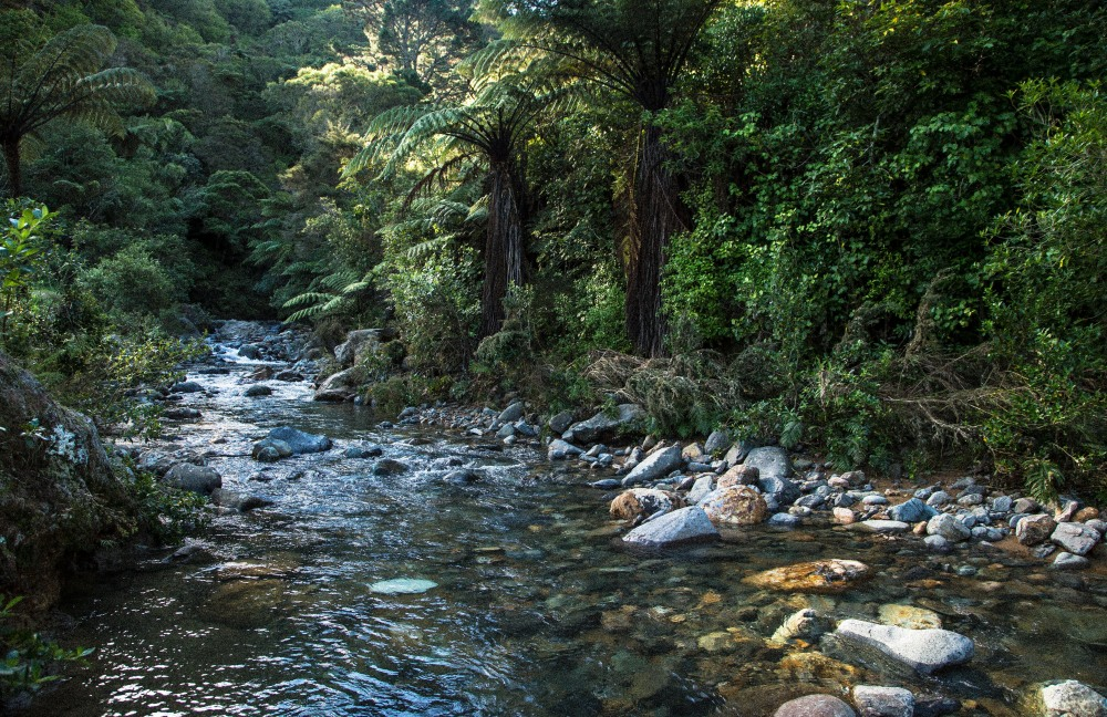 A typical New Zealand bush stream
