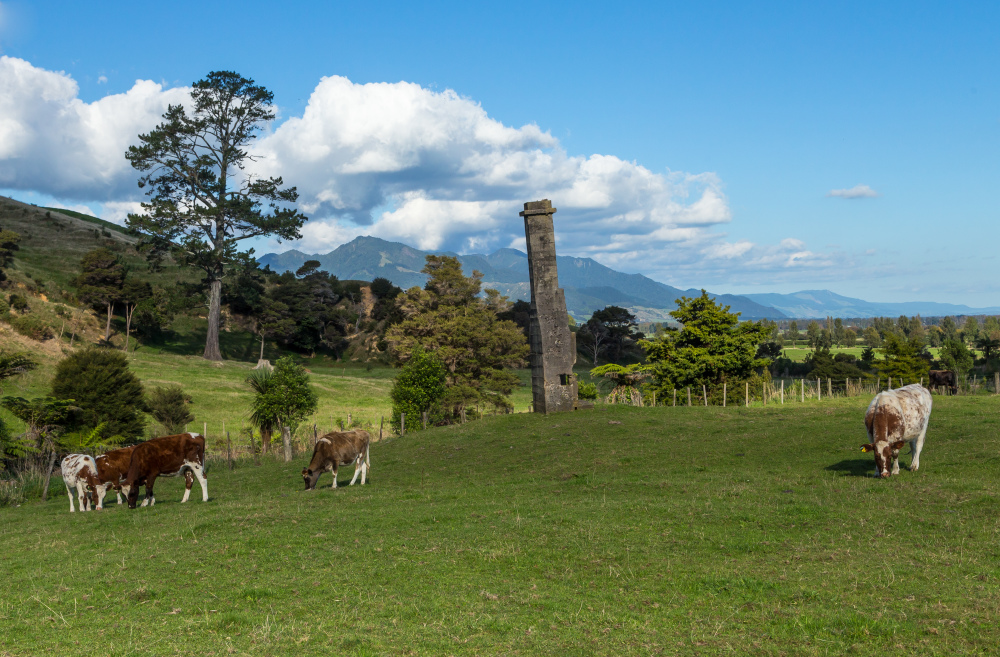 Paddock with chimney stack Waiorongomai