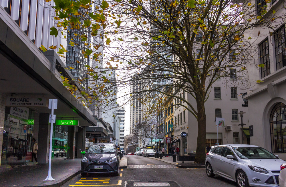 Auckland in Winter 6