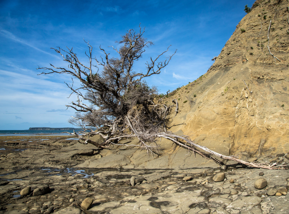 A dead tree in Martin's Bay