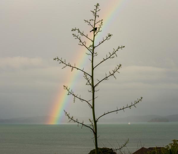 Bay Rainbow