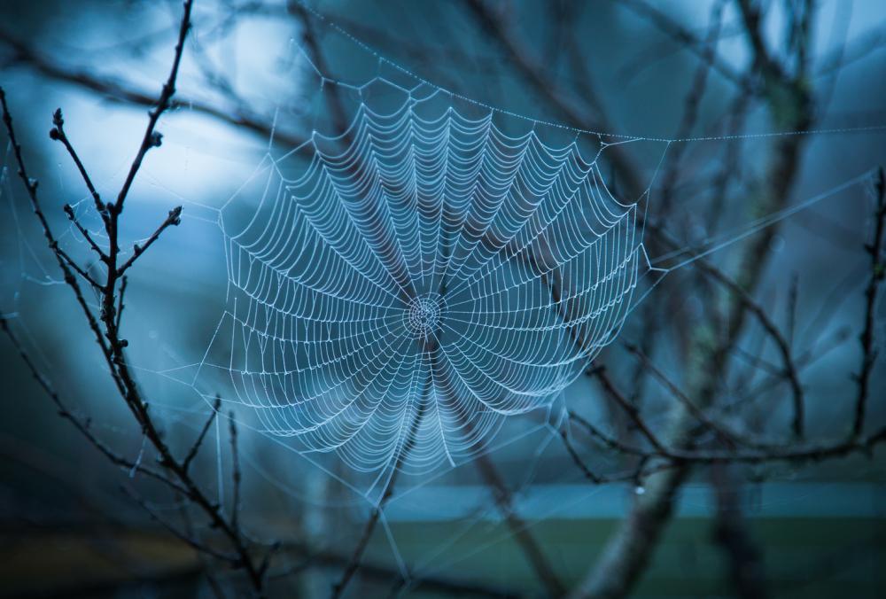 A spider's work