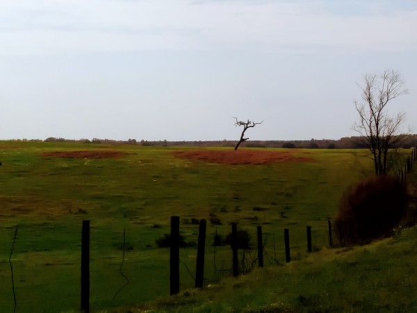 dead tree in field meadow landscape in warm colors
