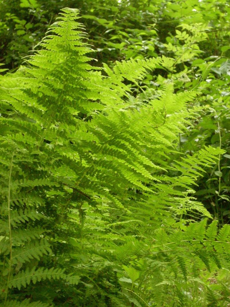 sunlight through summer ferns in warm greens